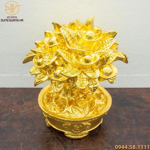 Cây kim tiền mạ vàng